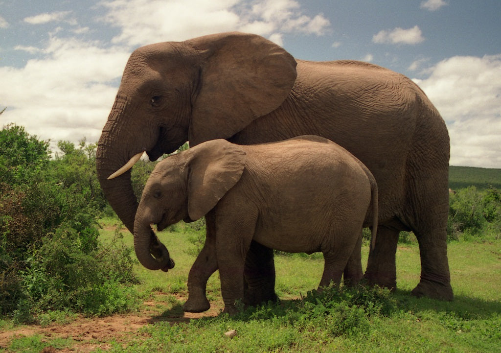 5 Animals With Bizarre Parenting Styles | tentree®