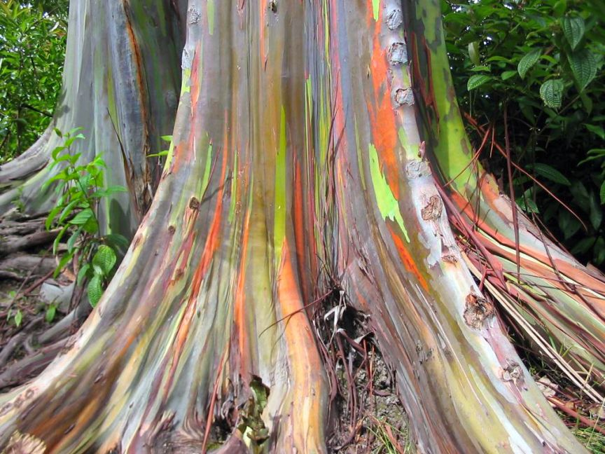 10 Reasons Why Rainbow Trees Are The Coolest