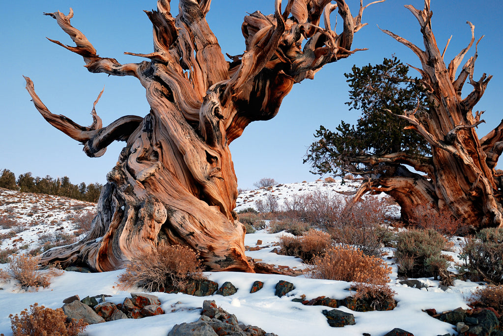 10 Of The World's Most Fascinating Trees