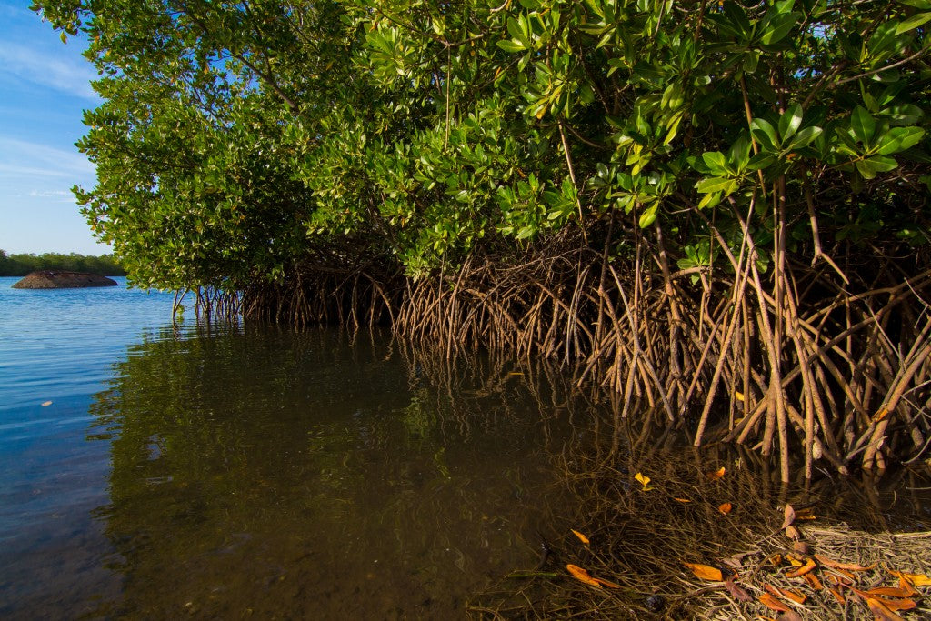 How Your Mangrove Trees Protect Waterways, Save Wildlife, And End Poverty In Madagascar