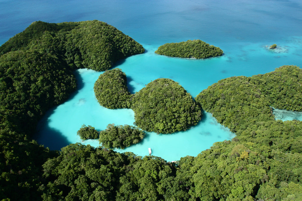 Palau Set To Ban Toxic Sunscreens To Protect Coral Reefs