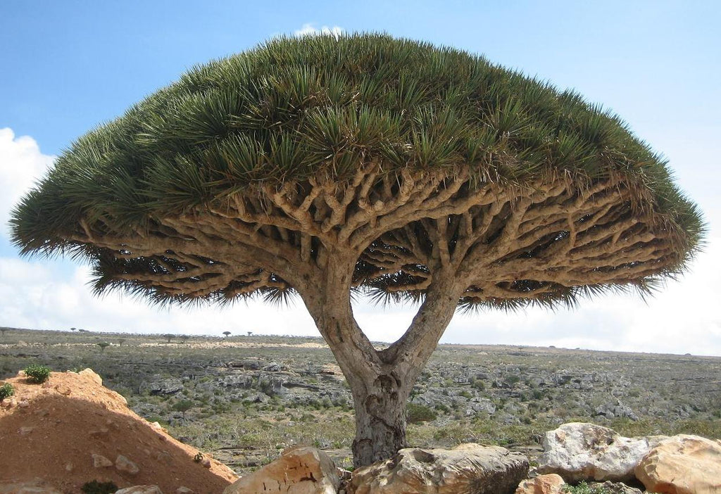 10 Trees That Look Like They're From Another Planet