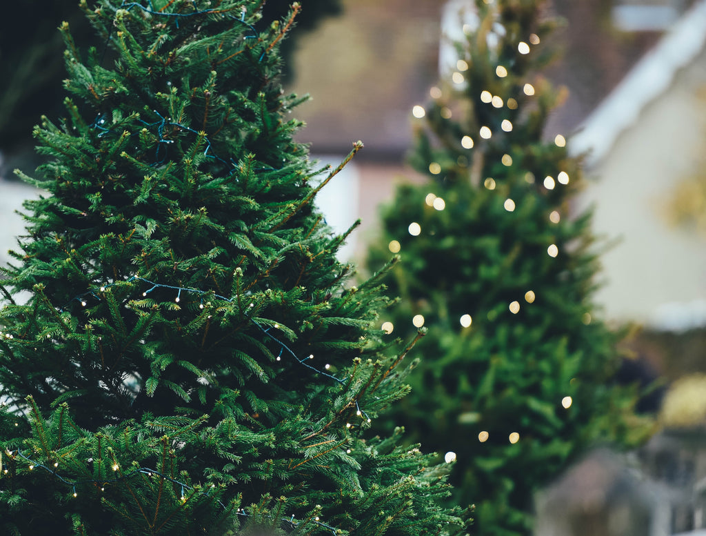 5 Ways To Recycle And Reuse Your Christmas Tree