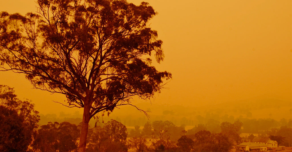 Australia Is Burning - This Is What You Can Do To Help