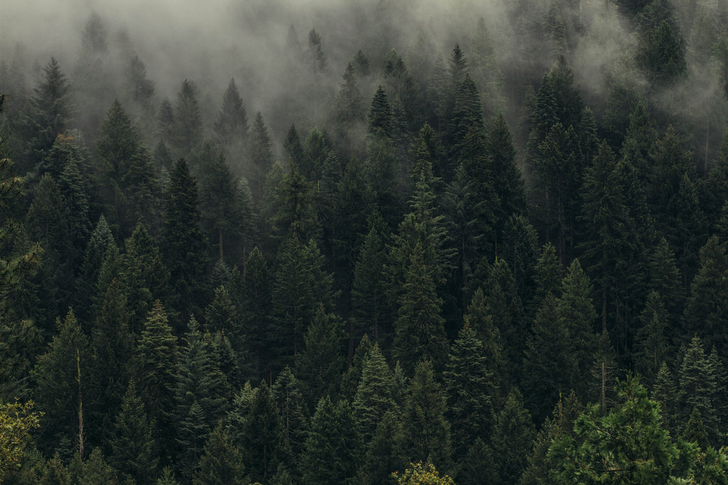 10 Reasons Why Forests Are Important