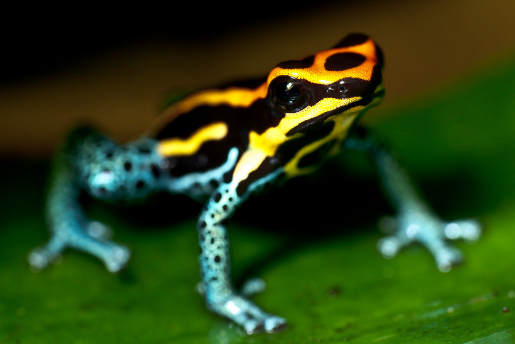 6 Incredible Creatures Found Only In The Amazon Rainforest