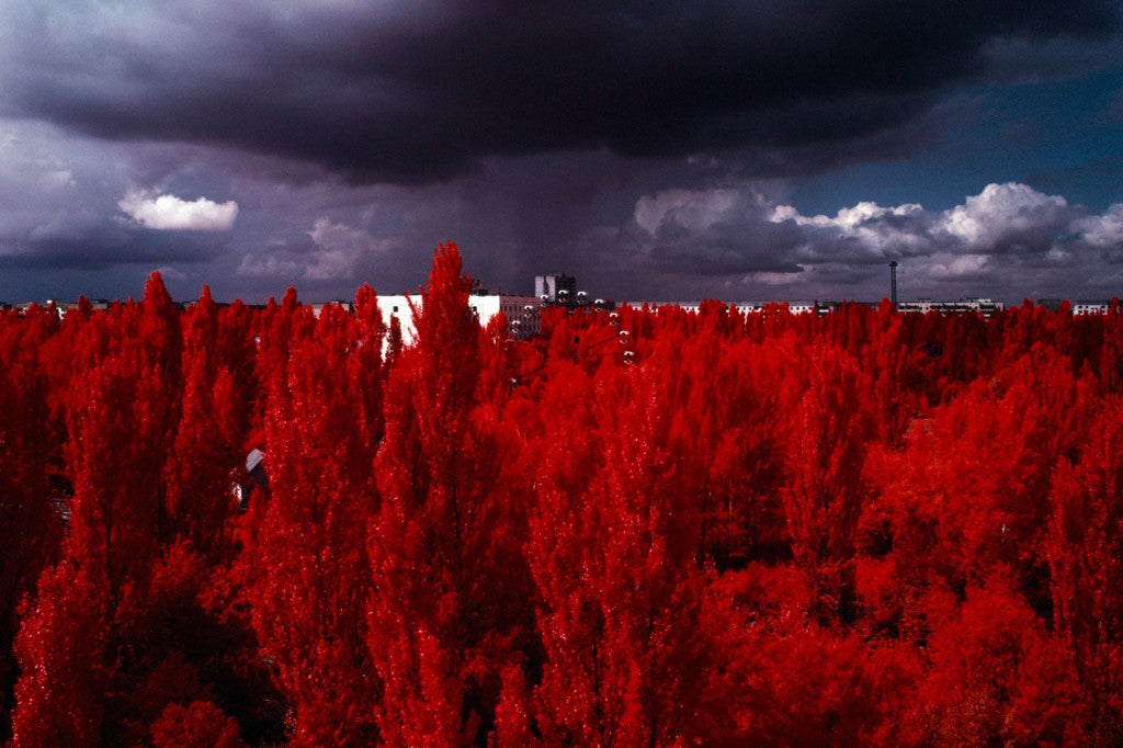 10 Incredible Photos Of 'Infrared Forests'