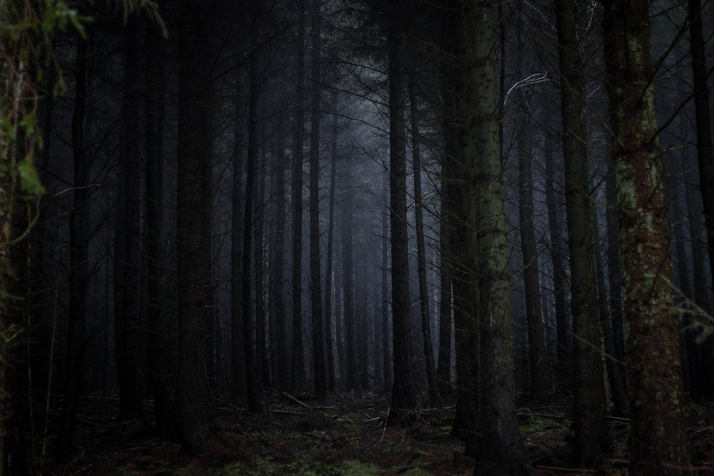 7 Of The Most Haunted Forests In The World