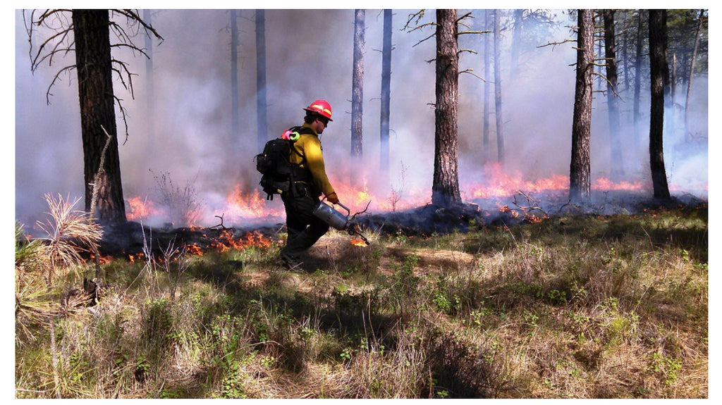 Why Forest Firefighters Are Our Heroes