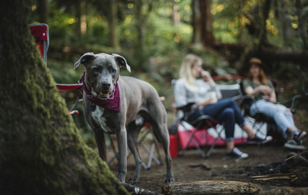 5 Things You Should Know When Camping With Your Dog