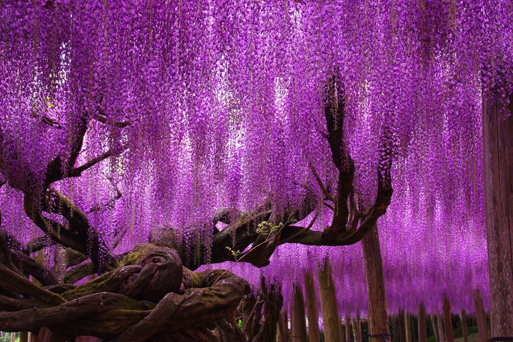 The 10 Coolest Trees In The World