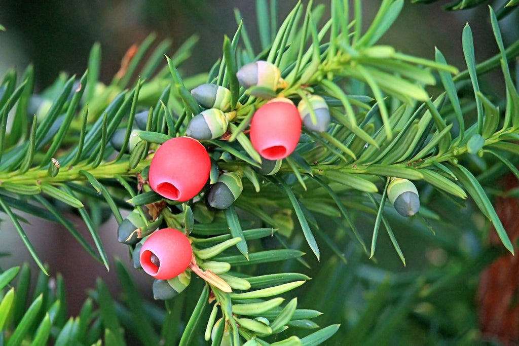 7 Of The Most Poisonous Plants In The World
