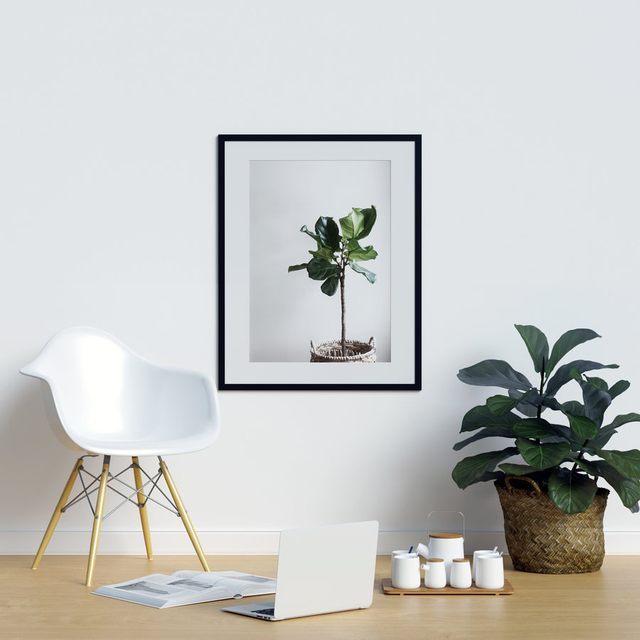 Potted Fig Poster - Printers Mews