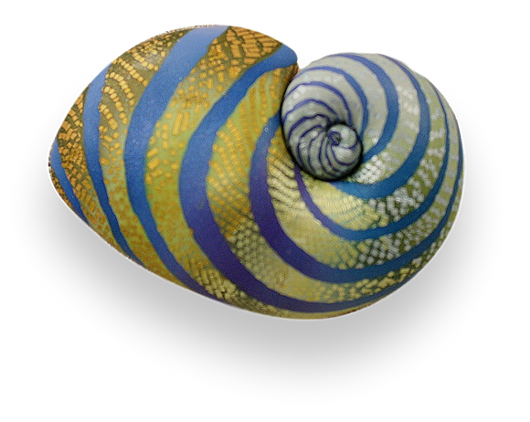 Elise Winters - Shell Brooch