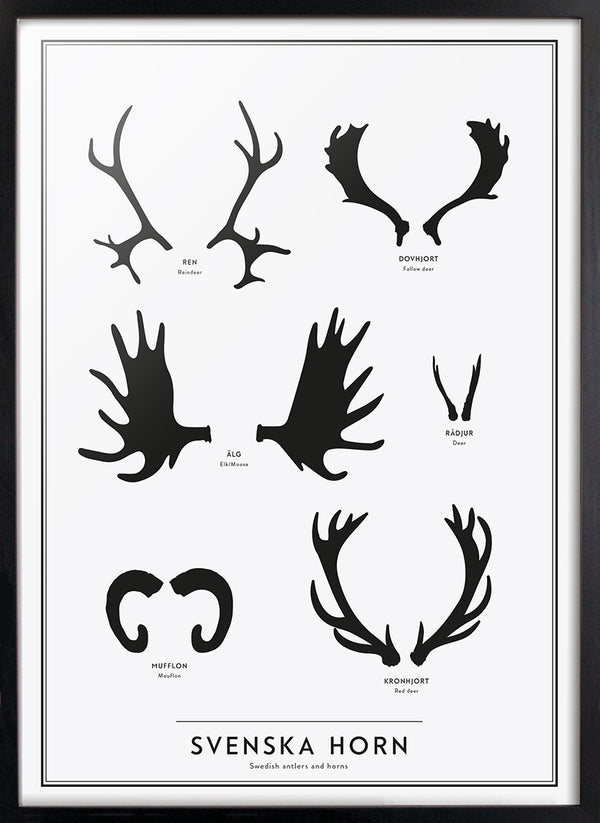 Swedish antlers and horns - Kunskapstavlan