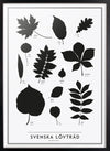 Swedish leaves - The SE collection