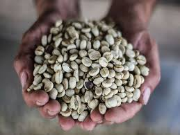 Colombia Huila Palermo - Green Coffee Beans