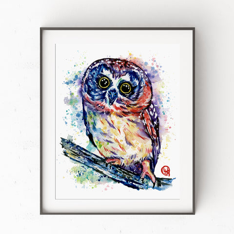 Saw-Whet Owl Watercolor Painting - Rocky