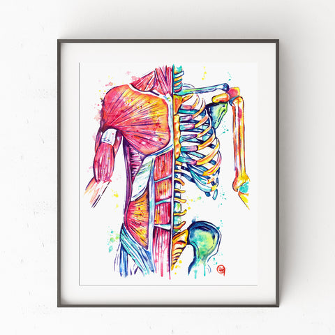 Muscular Anatomy Watercolor Painting Art Print