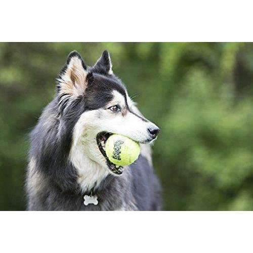 KONG Squeakair Dog Toy Tennis Ball
