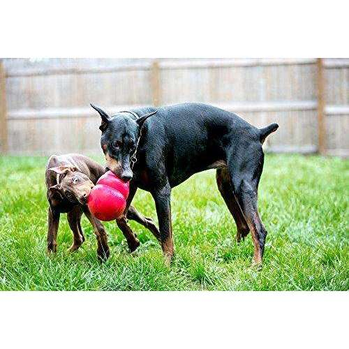 Compare cheap offers & prices of KONG Bounzer Dog Toy - Large 20cm manufactured by KONG