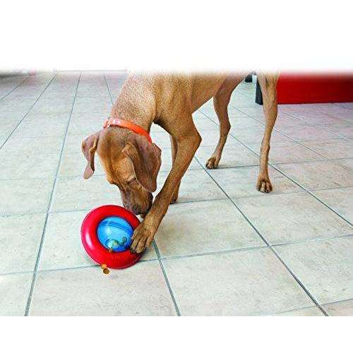 Compare cheap offers & prices of KONG Gyro - Large manufactured by KONG