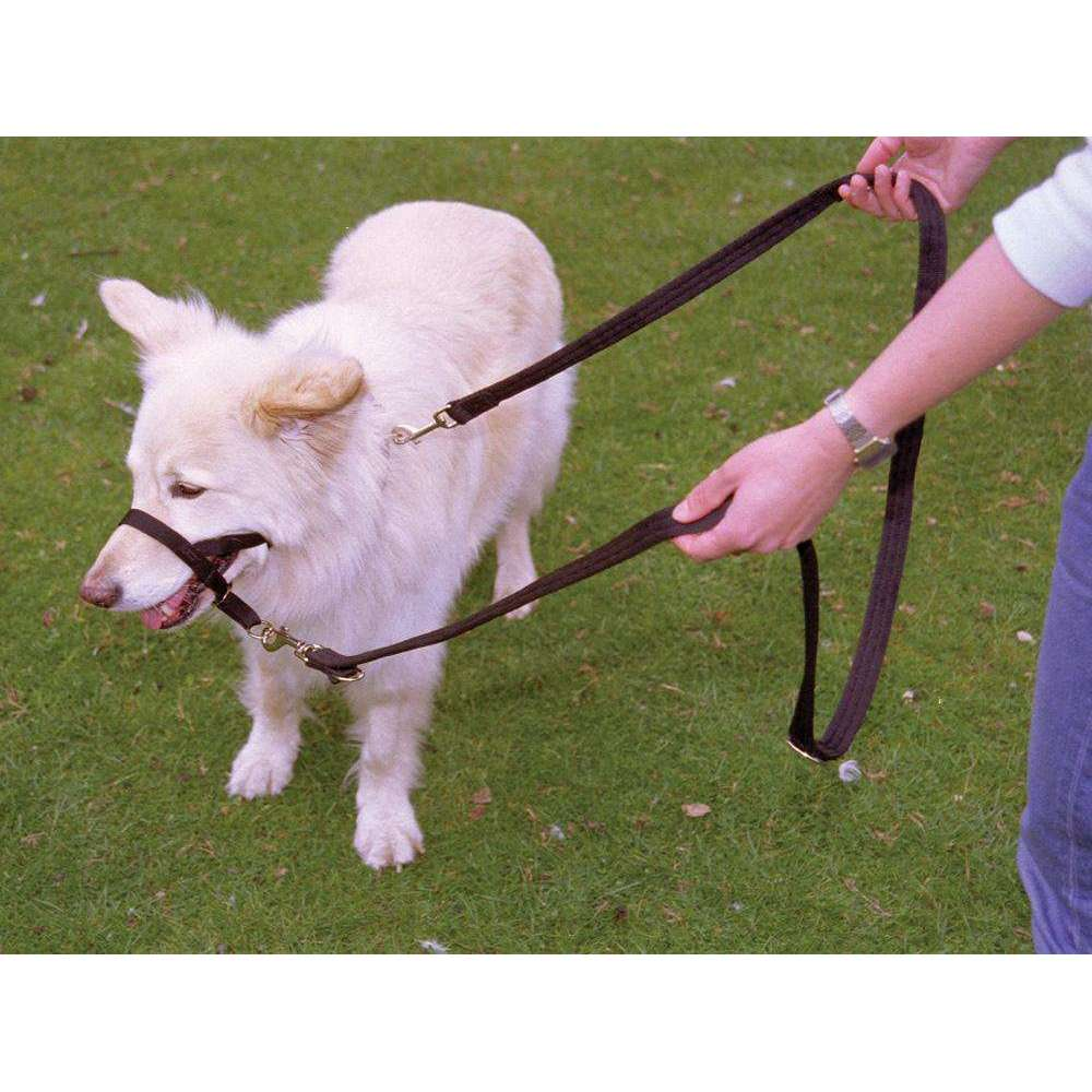 Compare cheap offers & prices of HALTI Training Lead - Black / Large manufactured by Halti