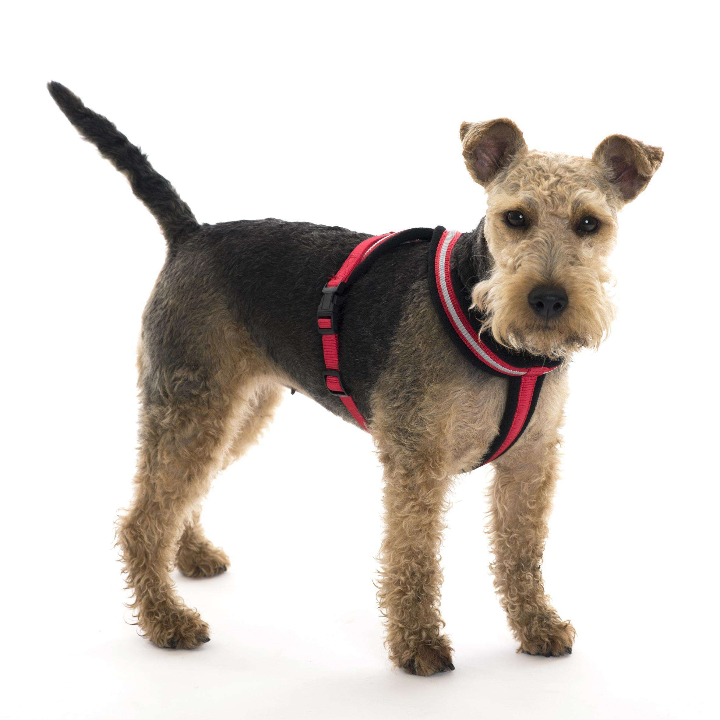 Cheapest price of HALTI Comfy Harness Red - Large in used is £15.52