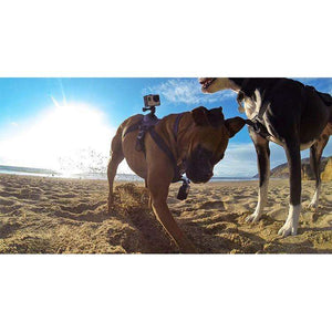 Dog Harness for GoPro Cameras