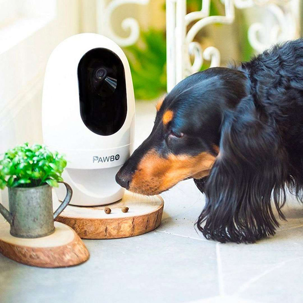 Pawbo Life Wi-Fi Pet Camera, Treat Dispenser and Light Game