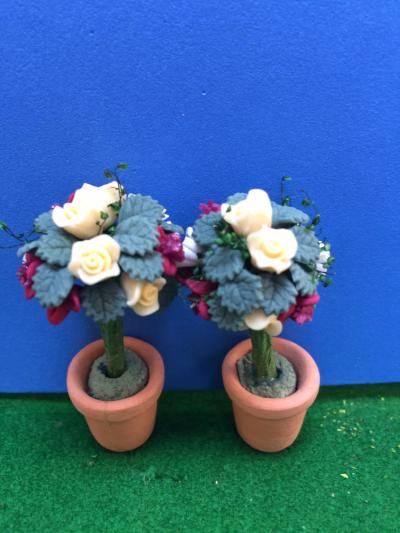 Roses in ceramic pots