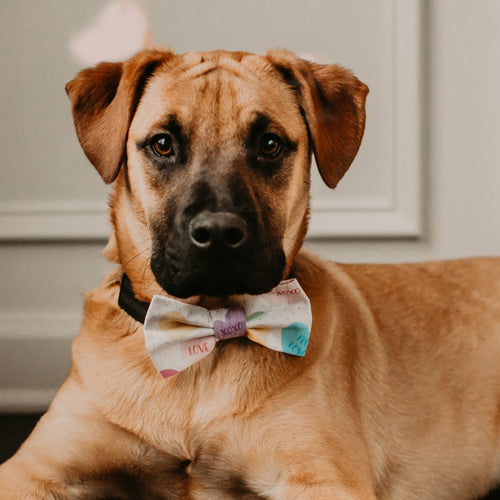 NEW Valentine's Day Conversation Hearts Pet Bow Tie By SweetLooks Collection - SweetLooks Collection
