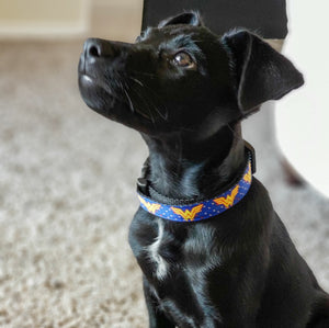 Wonder Woman 3/4 Inch Wide Dog Collar By SweetLooks Collection - SweetLooks Collection