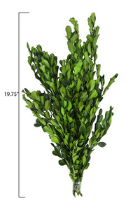 "19-3/4""H Dried Natural Boxwood Bunch, Green"