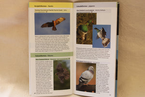 Catlins Birds Pocket Guide