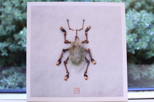 Insect Art Prints - Inspired by Nature