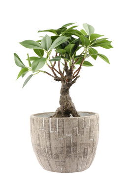 Artificial Bonsai Tree Plant Pot