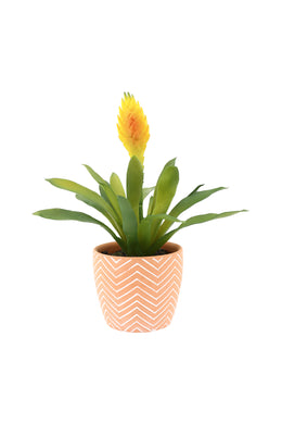 Artificial Billbergia Plant Terracotta Pot