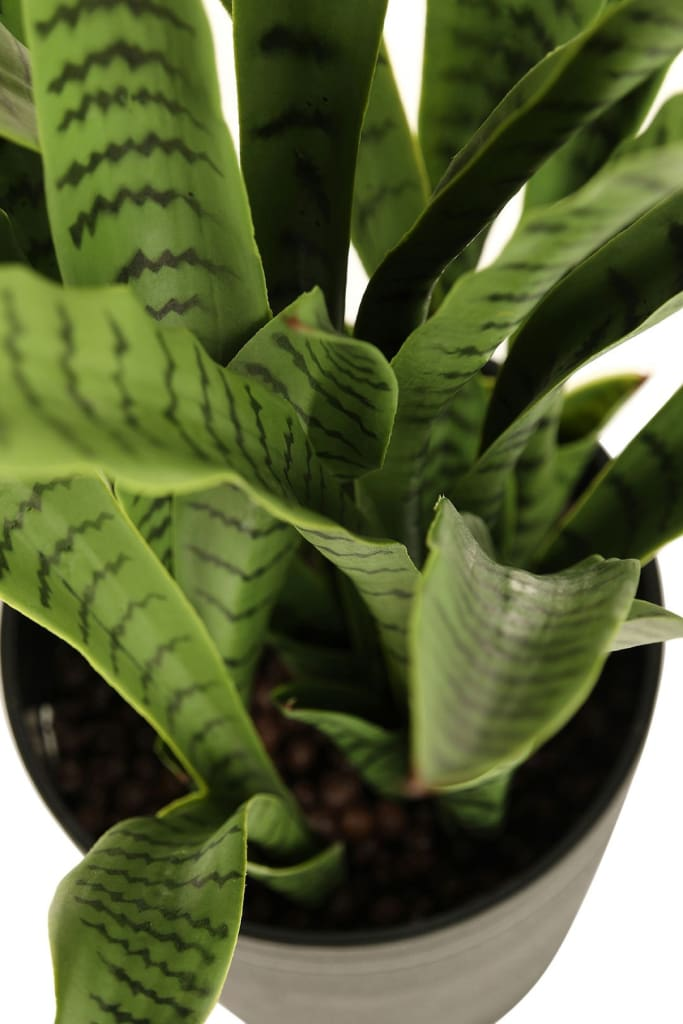 Artificial Green Snake Plant