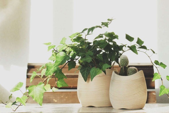 FUQUGI Planter CURVE Natural - Mimoto Japanese Homewares & Design