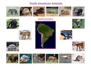 Animals of South America and Mini Matching & Vocabulary Enrichment Cards Bundle
