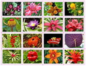 South American Flowers and Plants- Matching Freebie
