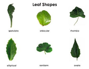 Leaf Shapes Montessori Three Part Cards and Leaf Shapes and Margins: Mini Matching Cards