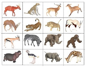 African Animals: Mini Matching Cards