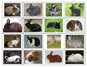 Parts of the Rabbit, Label the Parts of a Rabbit and Breeds of Rabbits Mini Matching Cards