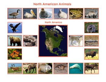 Animals of North America- and Mini Matching Cards Bundle
