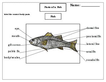 Printables: Label the Parts of a Fish