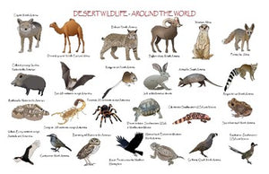 "Desert Wildlife - Around the World Poster: ""Ledger/Tabloid"" (11 x 17 inches)"