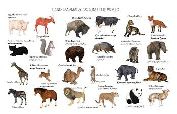 Land Mammals Around the World Poster: