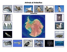 Animals of Antarctica: Montessori Three Part Cards and Antarctic Animals Mini Matching Cards